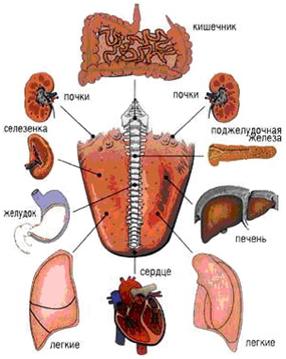 Vita.  Схема расположения на языке активных зон, отвечающих за работу внутренних органов человека.  Дата.