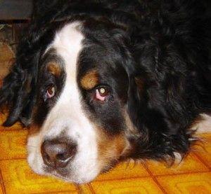 Чем болеют собаки