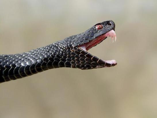 Помощь при укусах насекомых и змей