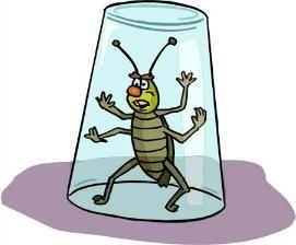 как можно вывести паразитов из организма
