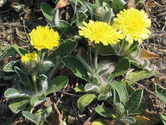 Лекарственные растения полезные свойства