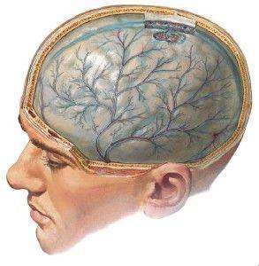 1331699609_meningity-i-encefality