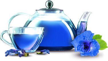 свойства пурпурного чая